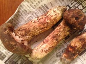 信州の松茸